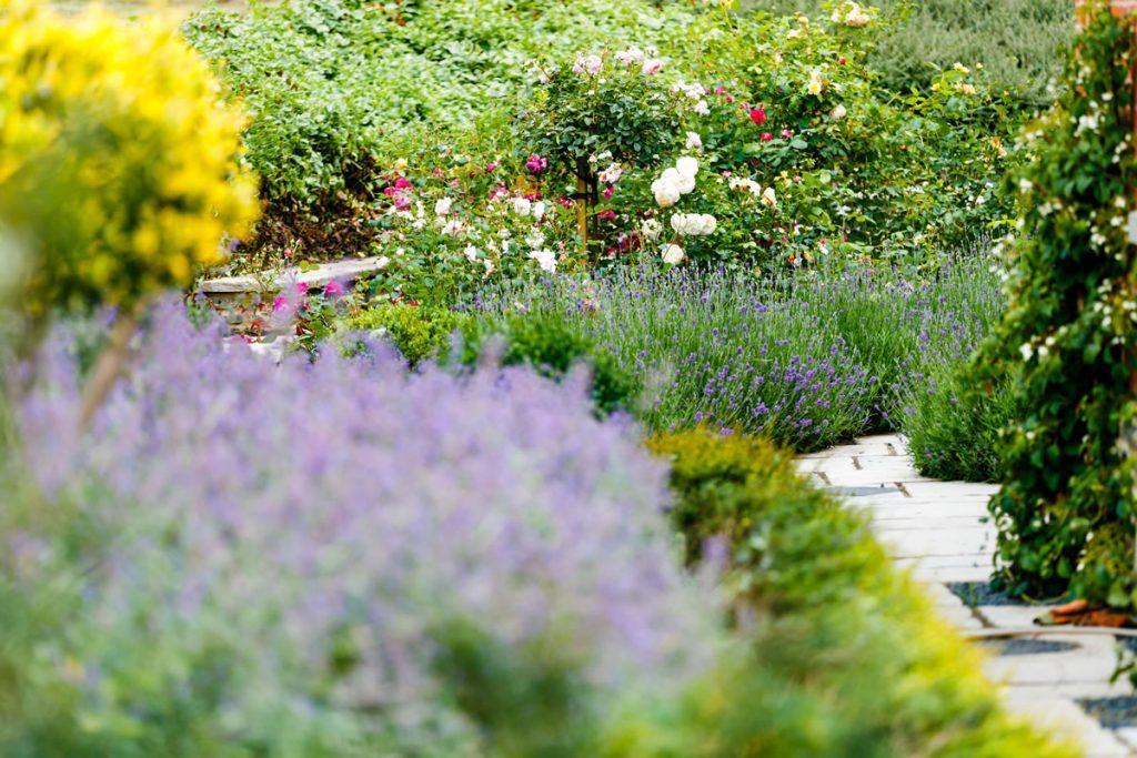 Well stocked garden